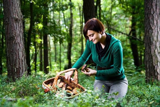 young woman picking mushrooms - höst plocka svamp bildbanksfoton och bilder