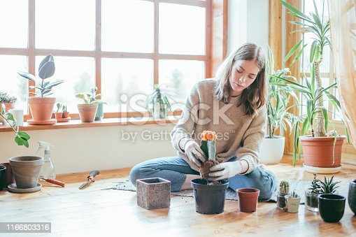 Candid portrait of young woman sitting on the floor planting her cactus. With copy space.
