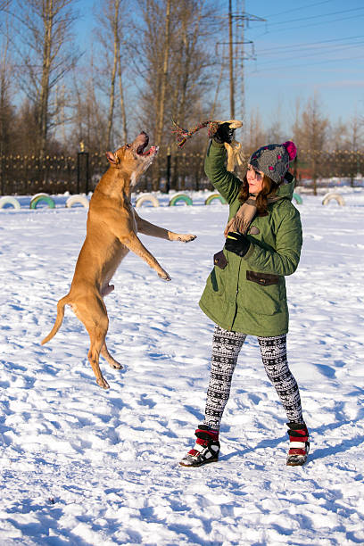 Young woman playing with American Pit Bull Terrier in winter stock photo