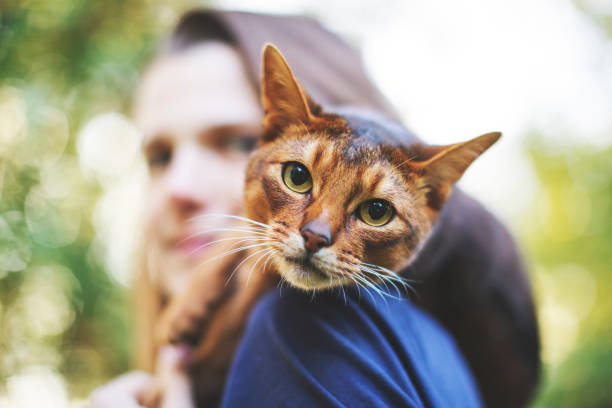 Young woman playing with cat stock photo