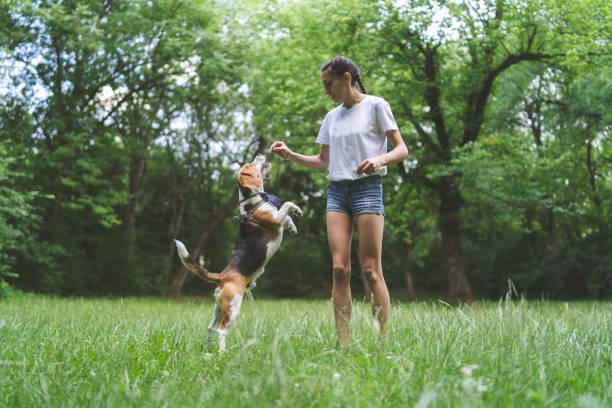 Young woman playing with dog in a park picture id1148681582?b=1&k=6&m=1148681582&s=612x612&w=0&h=fhspunbflkz1ic8eke0sewv6kmlsqitgu3s6j6arglw=