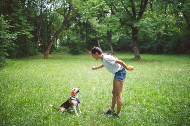 Young woman playing with dog in a park picture id1248399021?b=1&k=6&m=1248399021&s=612x612&w=0&h=milwpfk 4mb5thlqhrlrzhfgyuqqu74sudvflgi72ak=