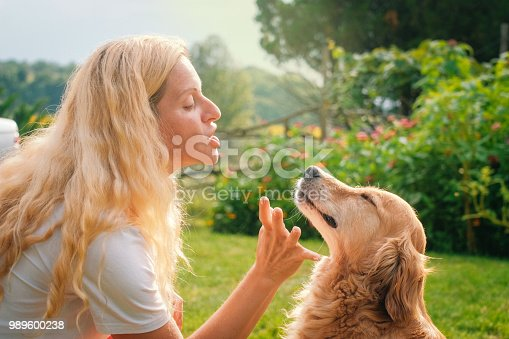 Springtime, Dog, Summer, Animal, Labrador Retriever