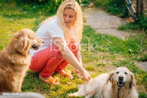 Springtime, Dog, Summer, Animal, Labrador Retriever