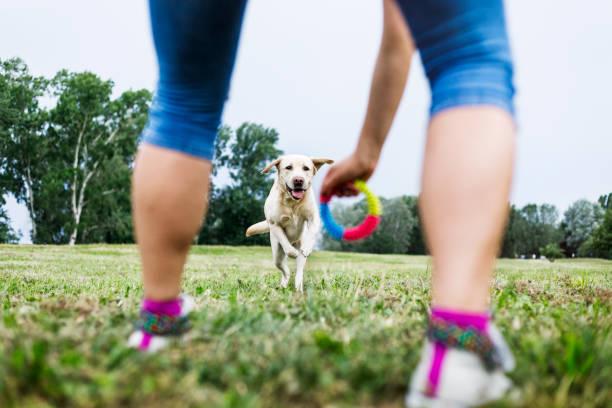 young woman playing with her dog outdoors - training imagens e fotografias de stock