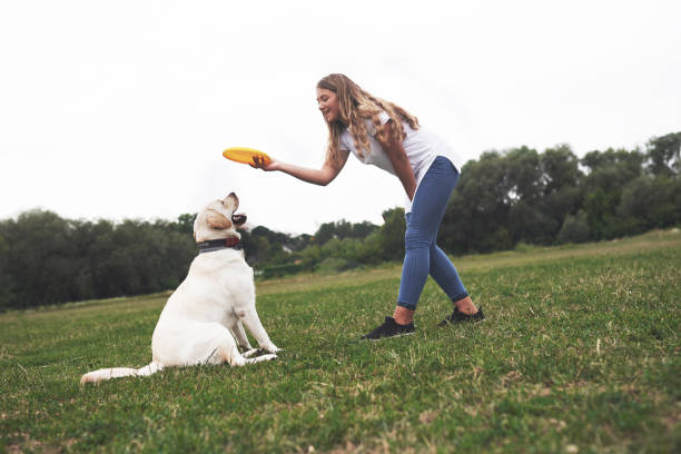 Young woman playing with her labrador in a park she is throws the picture id1135527642?b=1&k=6&m=1135527642&s=612x612&w=0&h=isyvtd8dfu6j5t7qmyzdiilqh2tymqwp1jq s7gzha0=