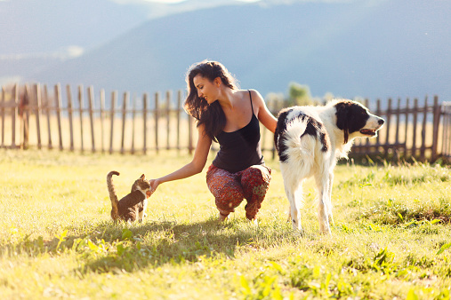 Young woman enjoys playing in the nature with her pets - a cute domestic cat and a shepherd dog, on the sunny day under the mountains in the rural countryside of