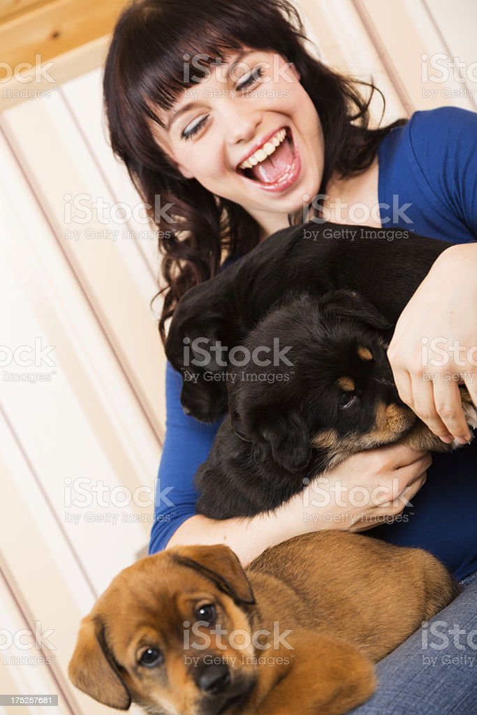 young woman playing with puppies royalty-free stock photo