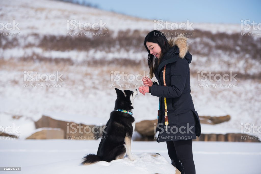 Young woman playing with small husky in snow and feeding a healthy treat stock photo