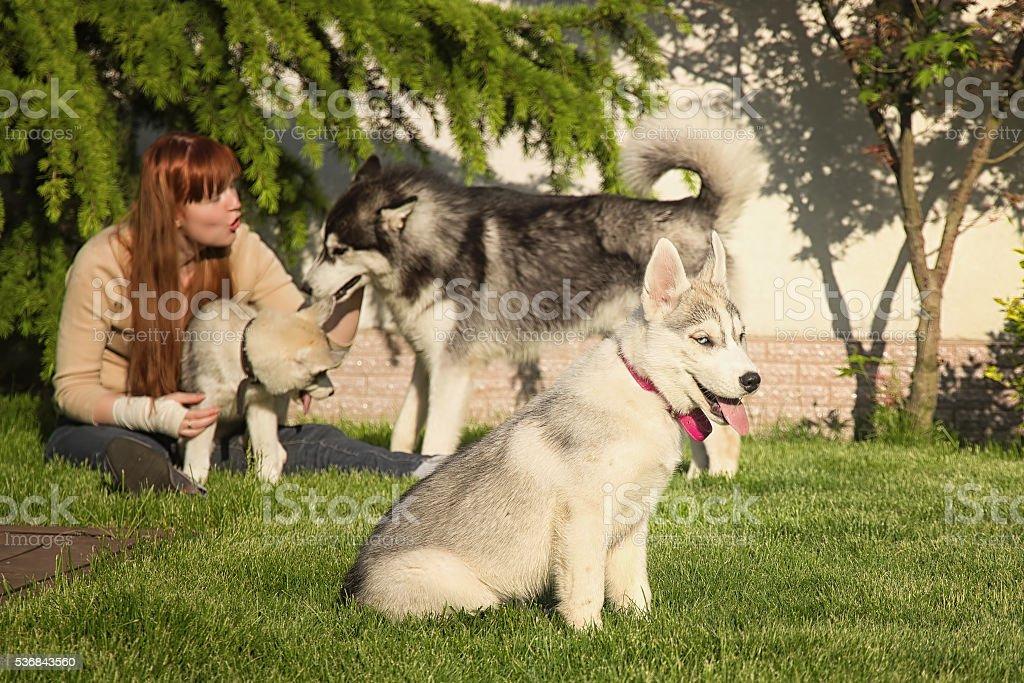 Foto De Young Woman Playing With The Dogs Siberian Husky Puppies E Mais Fotos De Stock De Adulto Istock