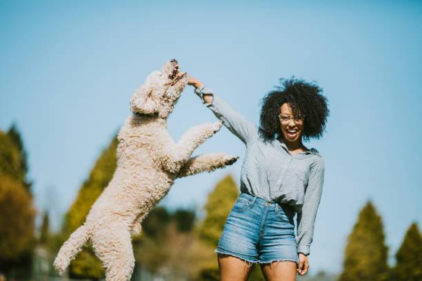 Young woman plays outside with pet poodle dog picture id954339034?b=1&k=6&m=954339034&s=612x612&w=0&h=qicyecnptfwmbjwriq3dkt 0djhycfdbz3i uxkfjve=