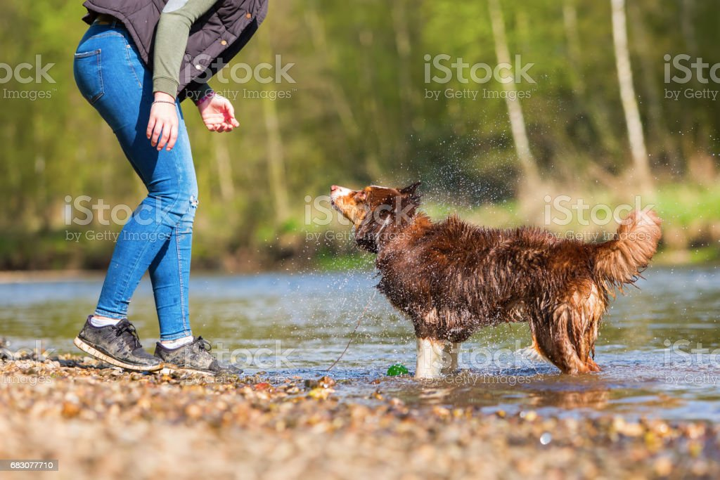 young woman plays with a dog at the river foto de stock royalty-free