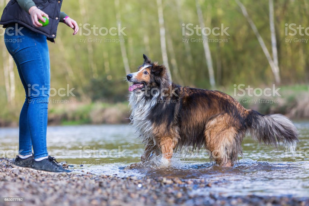 young woman plays with a dog at the river zbiór zdjęć royalty-free