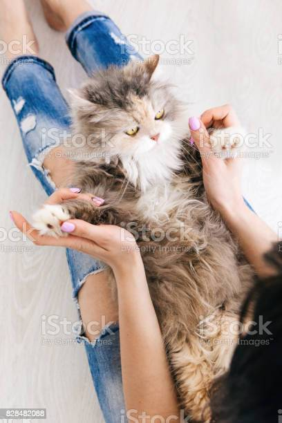 Young woman plays with cat laying on her knees picture id828482088?b=1&k=6&m=828482088&s=612x612&h=nvjlcw3pzcbcr 3res4zmkogaevwaqwp6yginlx3kn0=