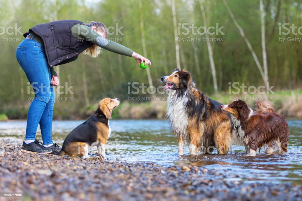 young woman plays with dogs at the river foto de stock royalty-free
