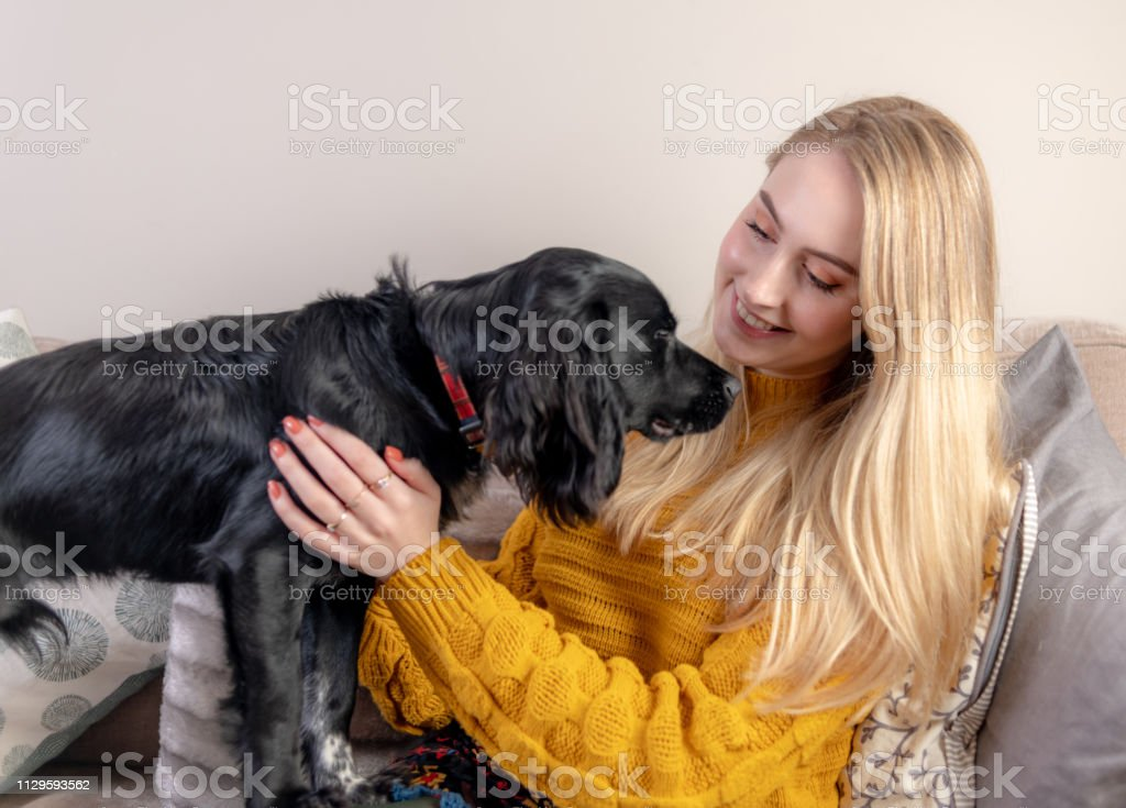 Young woman plays with her pet cocker spaniel stock photo