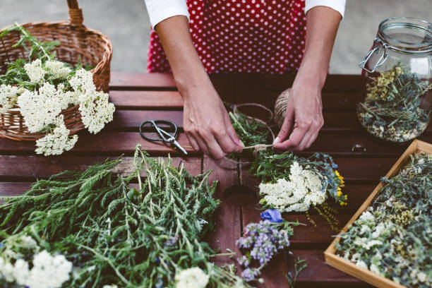 Young woman preparing medicinal herbs for tea stock photo