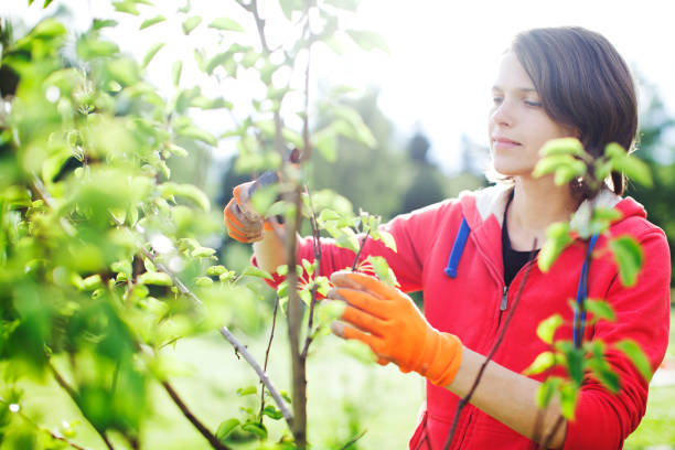 Young woman pruning bushes stock photo