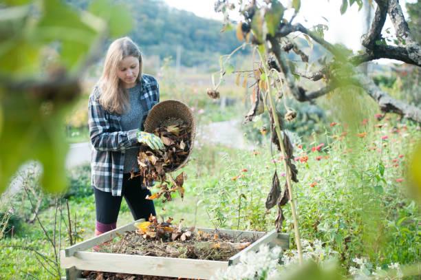 Junge Frau Recycling getrocknete Blätter in den Komposter, Slowenien, Europa – Foto