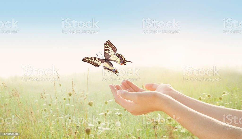 Young Woman Releasing Tiger Swallowtail Butterfly over Flower Field stock photo