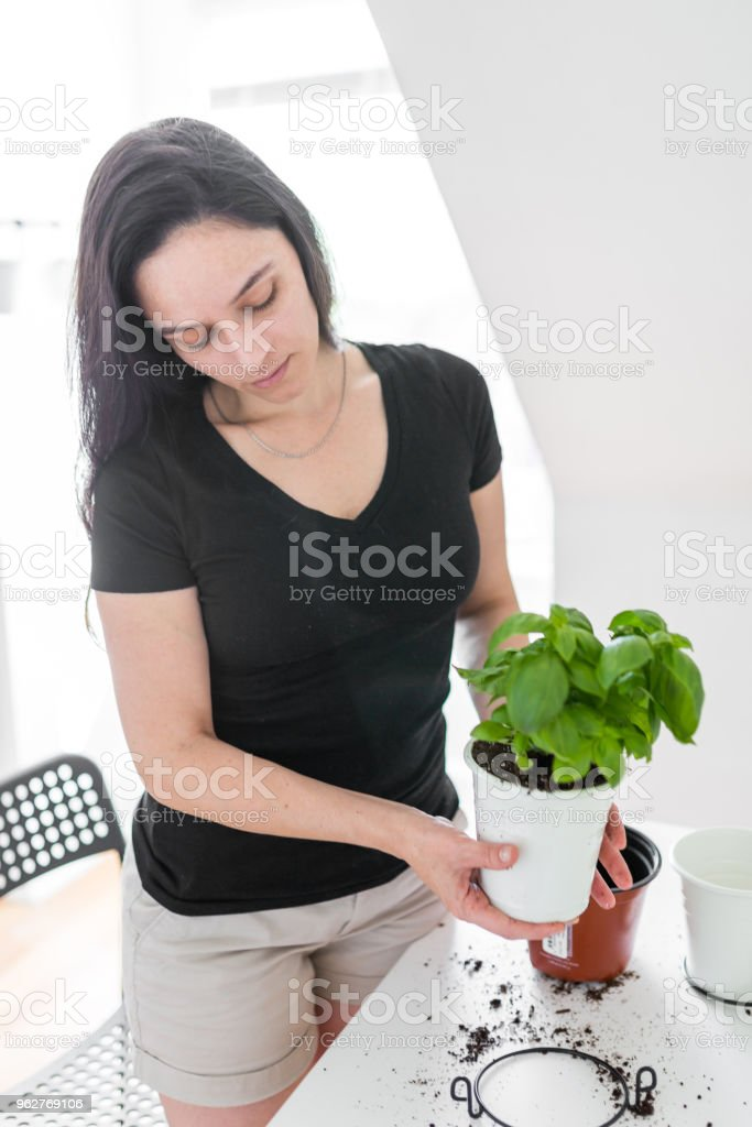 Young woman re-potting flower - Foto stock royalty-free di Accudire