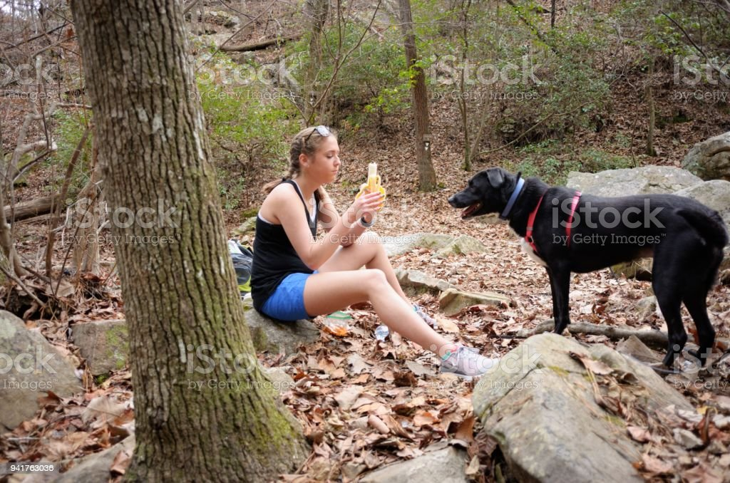 Young woman resting and eating banana on trail with labrador retriever stock photo