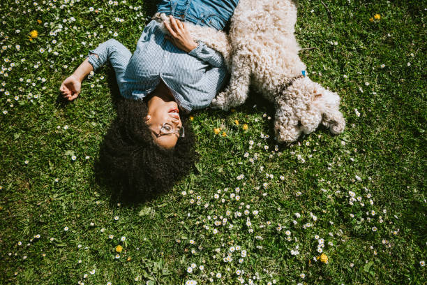 a young woman rests in the grass with pet poodle dog - happy dog imagens e fotografias de stock