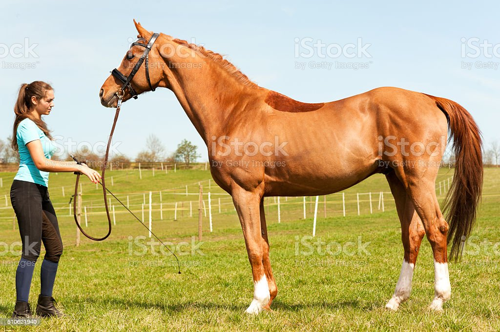 Young woman riding trainer holding  purebred chestnut horse. stock photo