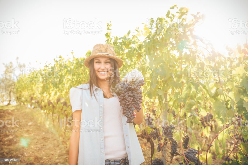 Young woman showing a bunch of grapes under a bright sun in a vineyard stock photo