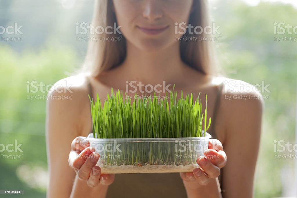 Young woman showing fresh raw wheatgrass seedlings in plastic tray stock photo