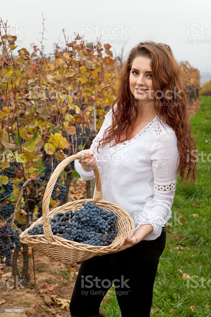 Young woman showing grapes at basket in the vineyard.. \'South...