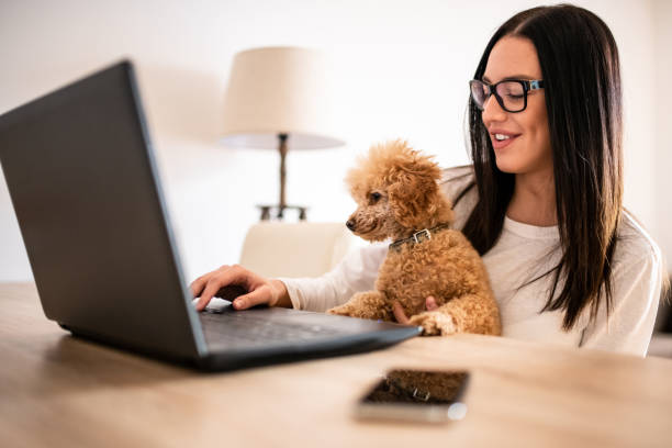 Young woman sitting at the desk at her home, working on the laptop while her puppy pet sits on her lap. Freelancer work from home concepts in casual atmosphere. stock photo