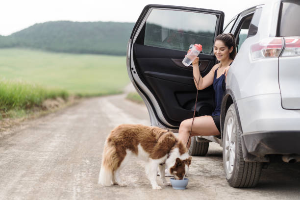Young woman sitting in car and dog drinking water stock photo