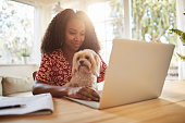 Smiling young African American woman sitting with her adorable little dog on her lap and working online with a laptop at home