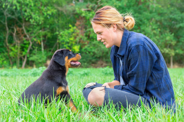 Young woman sitting with rottweiler puppy in meadow stock photo
