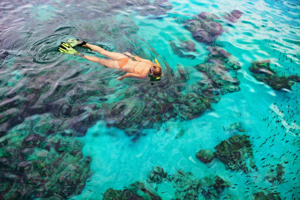Young woman snorkeling with coral reef fishes Young girl in snorkeling mask dive underwater with tropical fishes in coral reef sea pool. Travel lifestyle, water sports, outdoor adventure, swimming lessons on family summer beach holiday with kid snorkel stock pictures, royalty-free photos & images