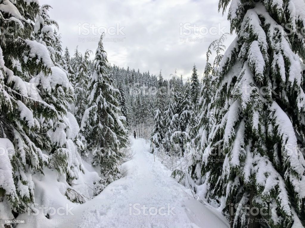 A young woman snowshoeing in the distance along the bowen island lookout trail on Cypress Mountain, British Columbia, Canada; walking in her snowshoes through freshly fallen snow stock photo