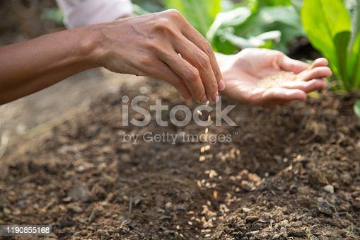 Close-up of woman's hand sowing seed in soil.