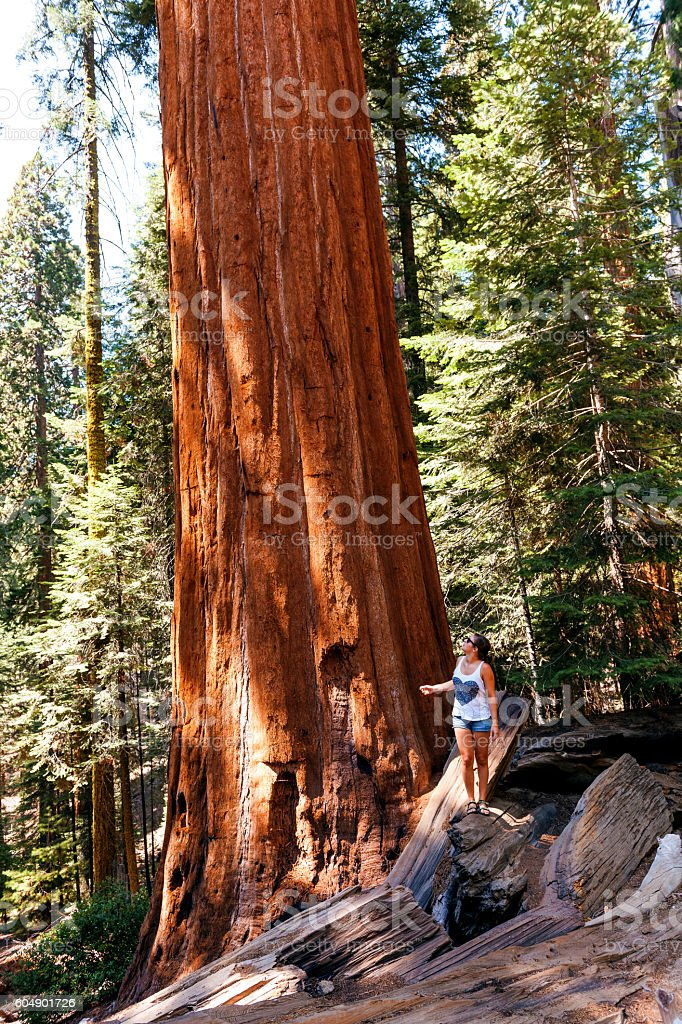 Young Woman Standing by  Sequoia Tree,  California National Park, USA. stock photo