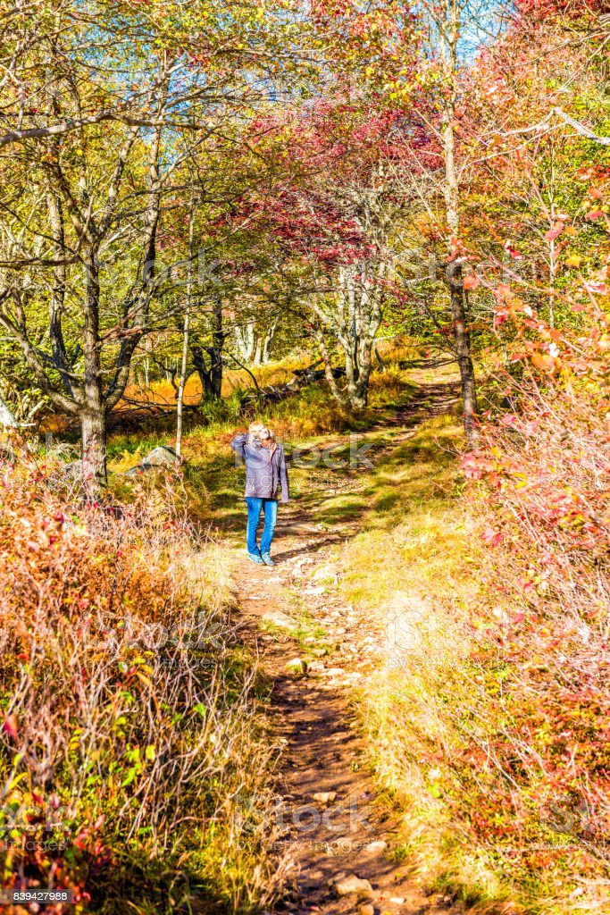 Young woman standing on trail path in autumn forest on hill in Dolly Sods, West Virginia stock photo