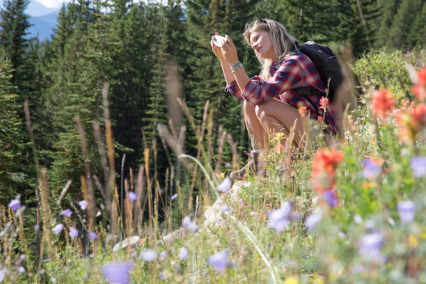 junge frau nimmt foto an wildblumen mit handy - canda armband stock-fotos und bilder