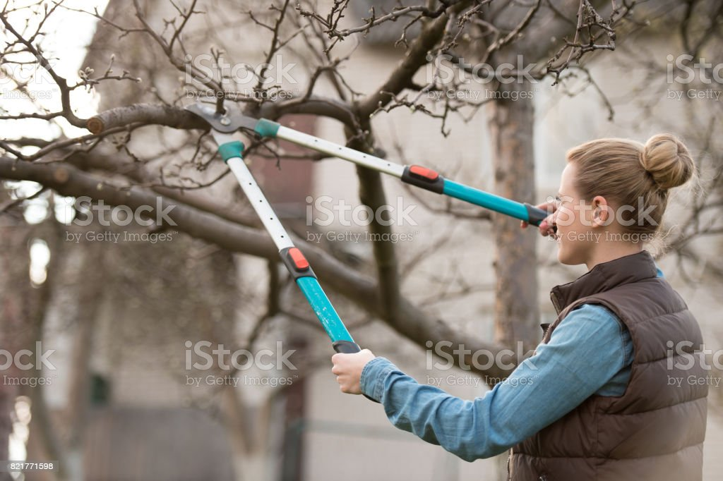 Young woman taking care of garden, Cutting tree branch stock photo