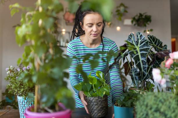 Junge Frau kümmert sich um ihre Topfpflanzen zu Hause – Foto