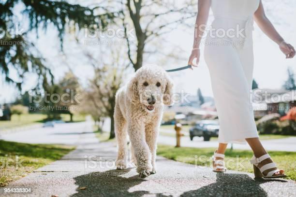 Young woman taking pet poodle dog for walk picture id954338304?b=1&k=6&m=954338304&s=612x612&h=1jpq0a 0rojknvuyvlirw2acueatnhxwjibc6cxnjje=