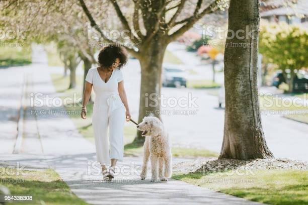 Young woman taking pet poodle dog for walk picture id954338308?b=1&k=6&m=954338308&s=612x612&h=iouheshxb2lyo26lswov fb3wuhe8dwefjupgb4q5ou=