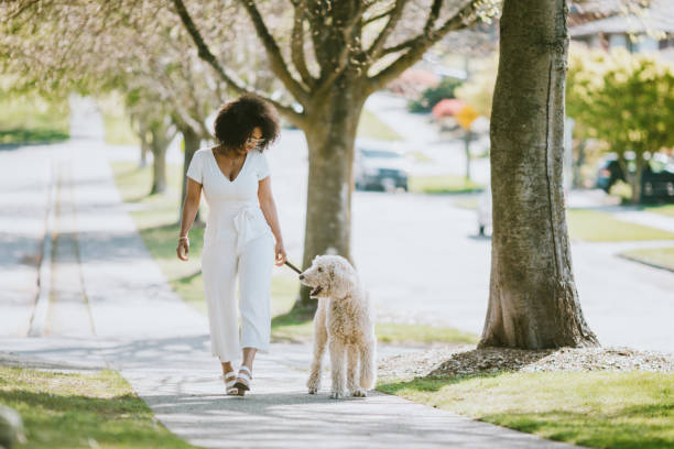 Young woman taking pet poodle dog for walk picture id954338308?b=1&k=6&m=954338308&s=612x612&w=0&h=mptisd6se6phfzvrbz01ttycvkze9vb ayonq9qro2k=