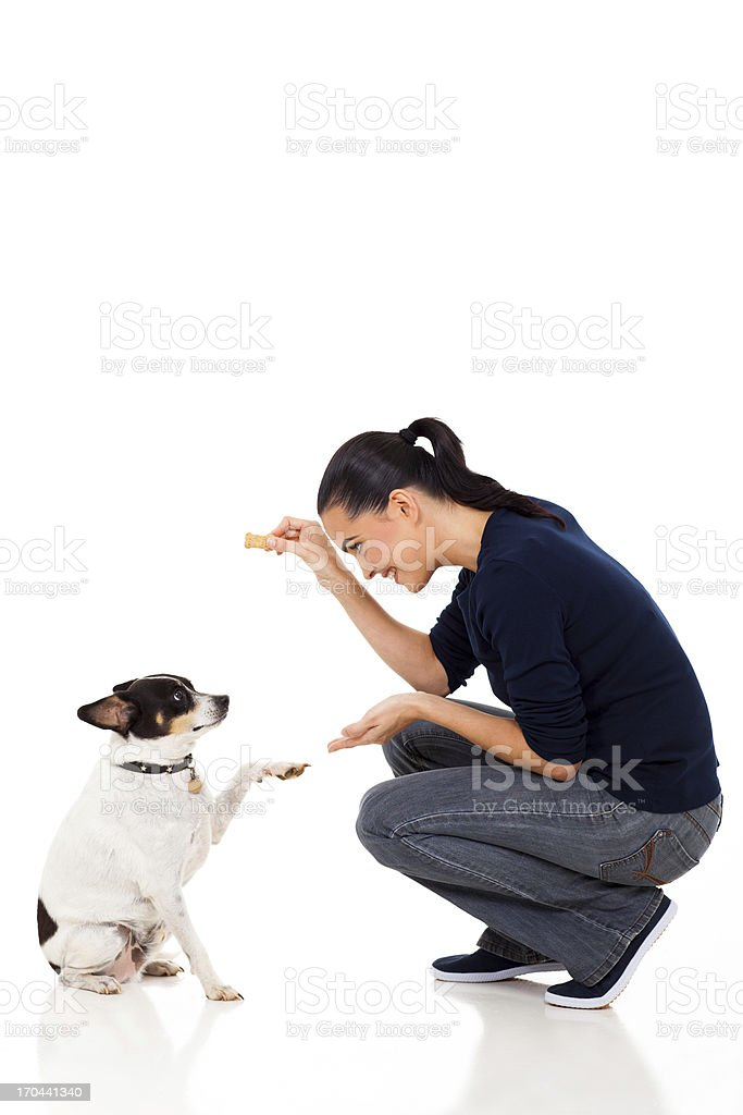 young woman training her dog stock photo