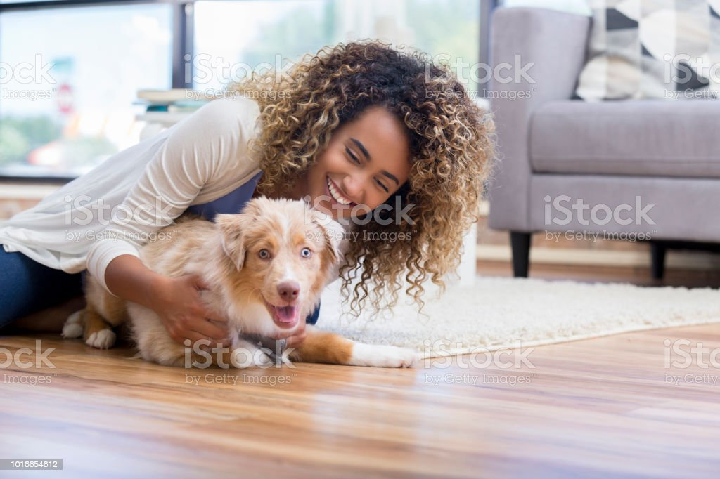 Young woman training puppy stock photo