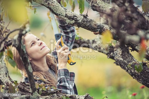 Young Woman Trimming a Fruit Tree.