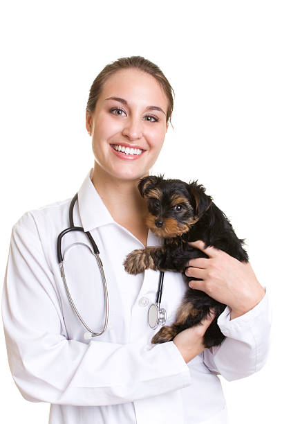 Young woman veterinarian holding small black dog stock photo